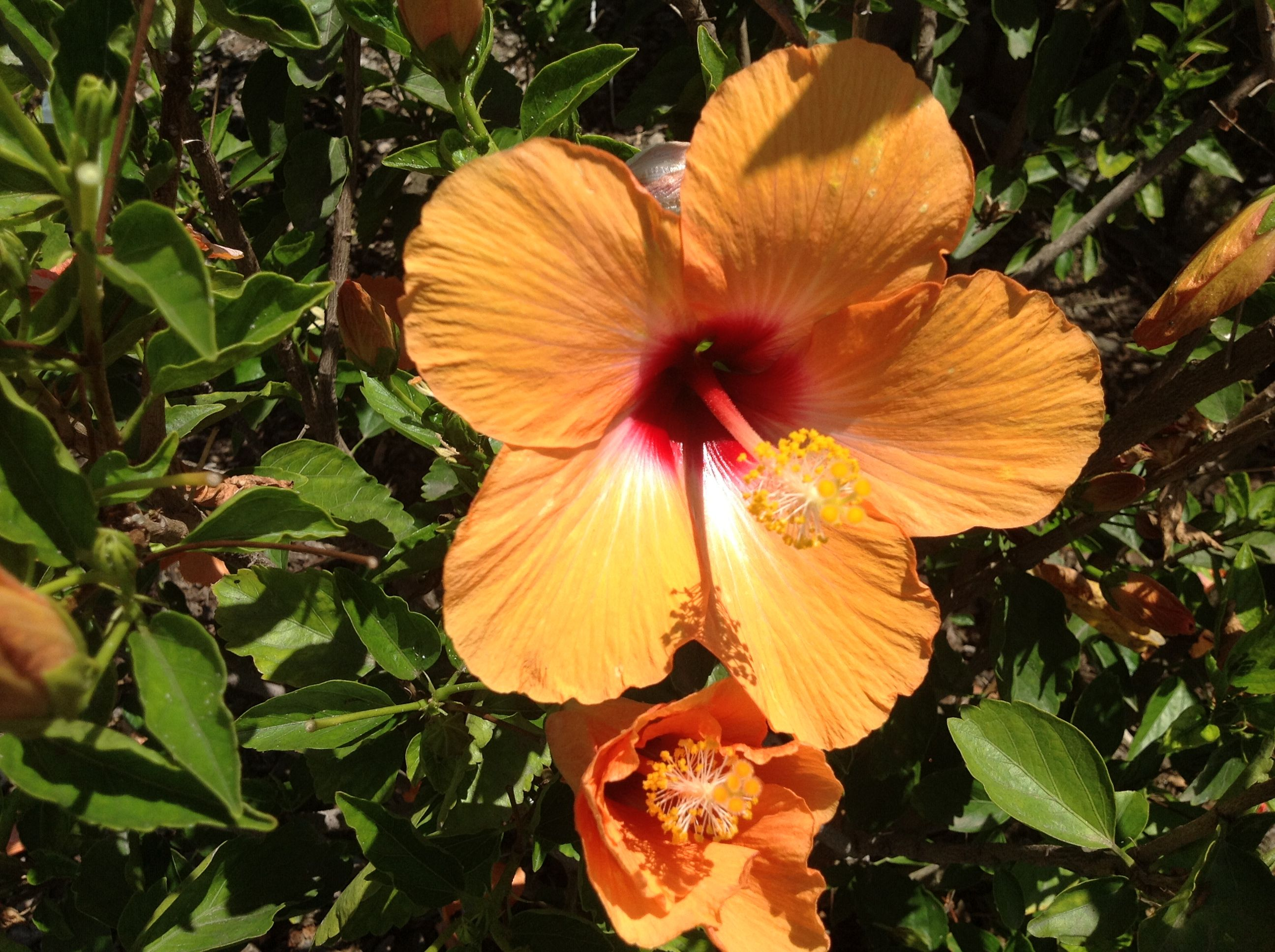Love Hibiscus Flowers Makes Me Think Of Hawaii Things I Love