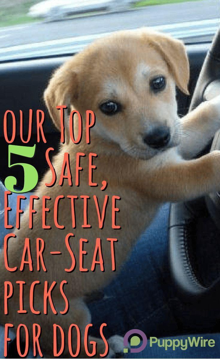 Best dog car seats top 5 safe effective picks reviews