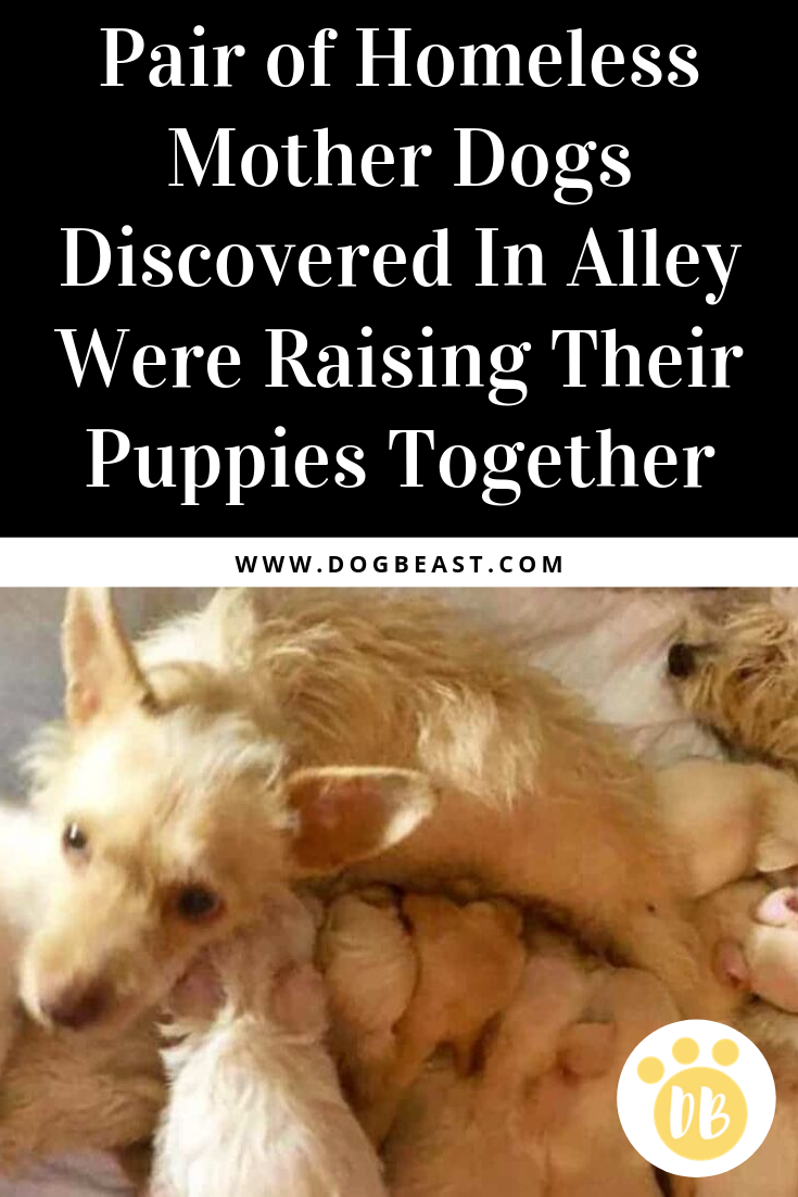 Pair Of Homeless Mother Dogs Discovered In Alley Were Raising Their Puppies Together Puppies Dog Stories Animal Stories