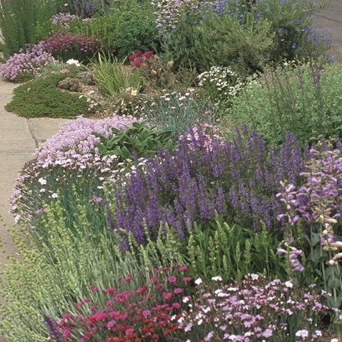 The soft colors inferno strip pre planned garden design for Colorful low maintenance perennials