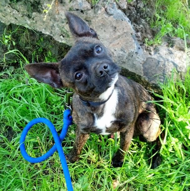 Adopt Luke on Petfinder Terrier mix dogs, Animals