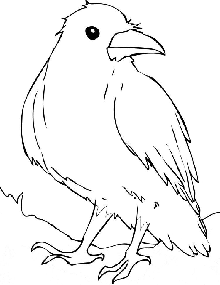 Raven Bird Coloring Page Bird Coloring Pages Mermaid Coloring Pages Coloring Pages