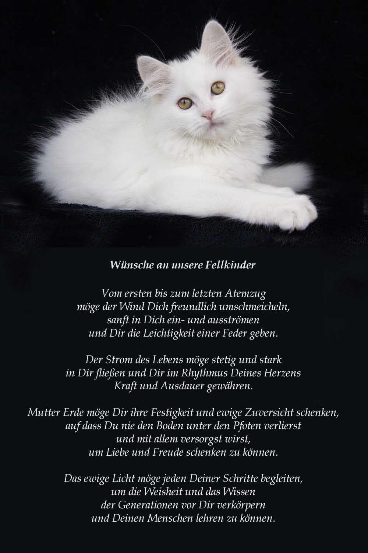 Unseren Fellkindern Katzen Zitate Spruche Katze Haustier Erinnerung