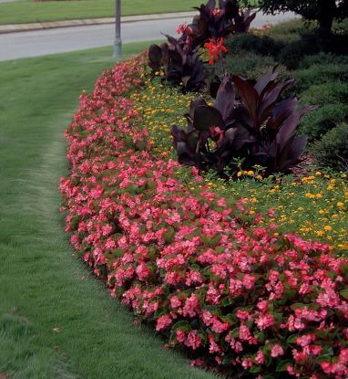 Shade Plants Outdoor Front Yards