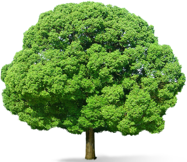 Green Tree Png Picture Shrubs For Landscaping Grass Photoshop Green Trees