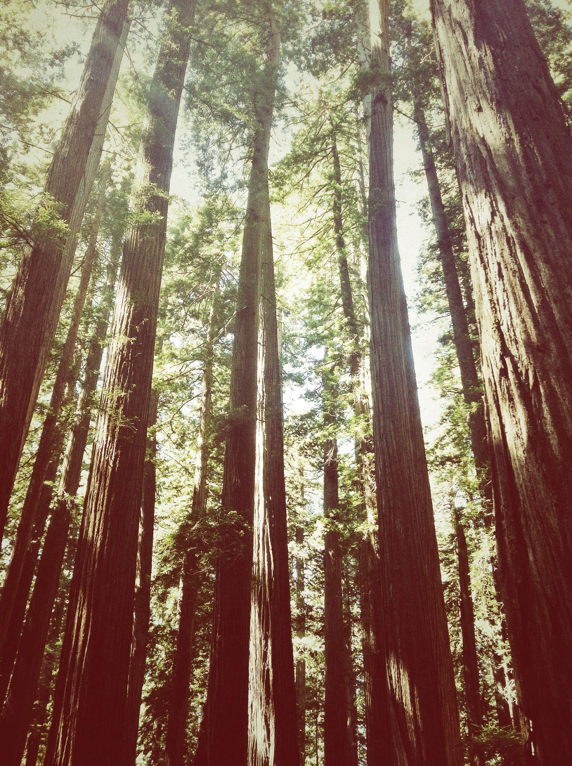Jedediah Smith National Park, California Taken by Nichole Zittel