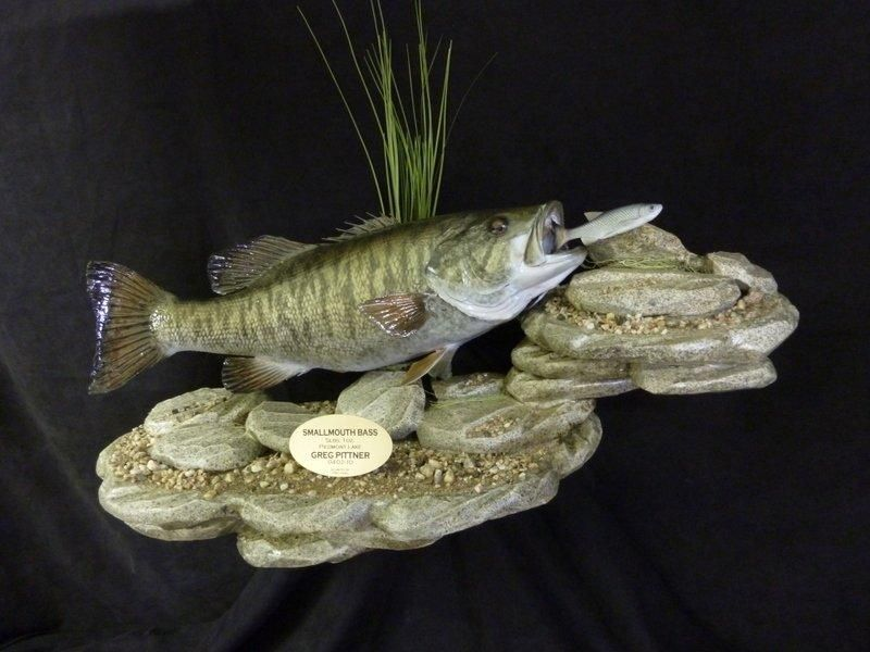 26. SMALLMOUTH BASS SKIN MOUNT ON 2LEVEL ROCK BASE FOR