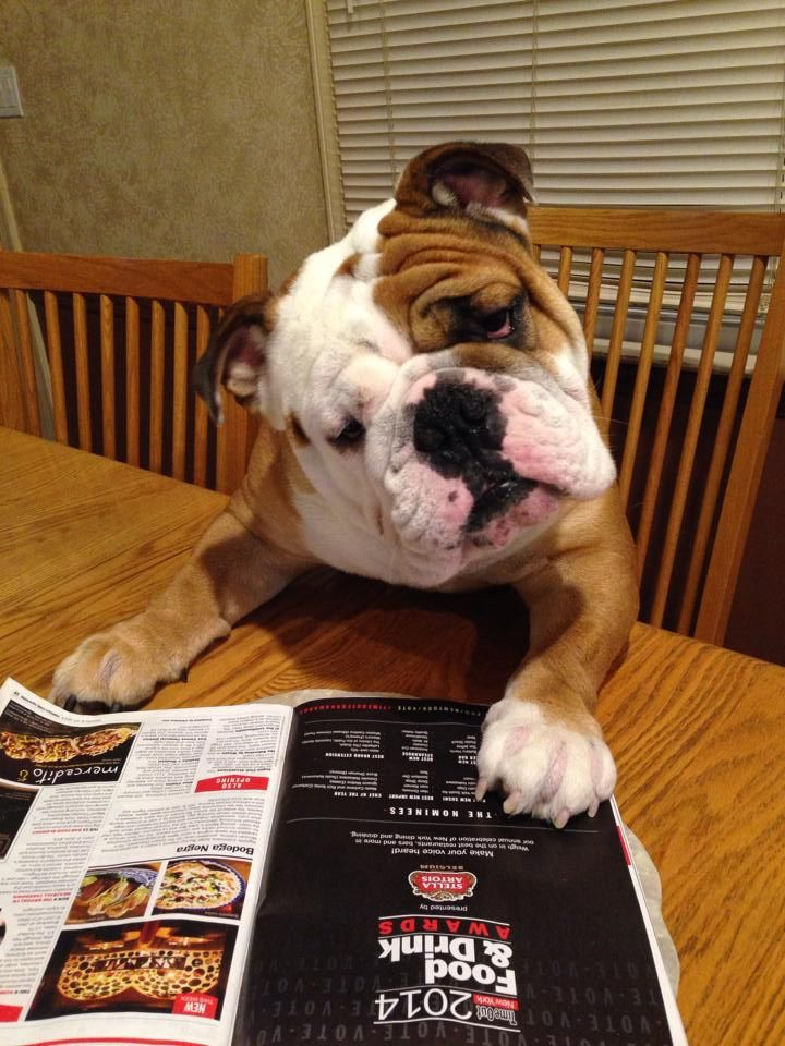 English Bulldog Uh Oh My Dog Food Did Not Make This Awards