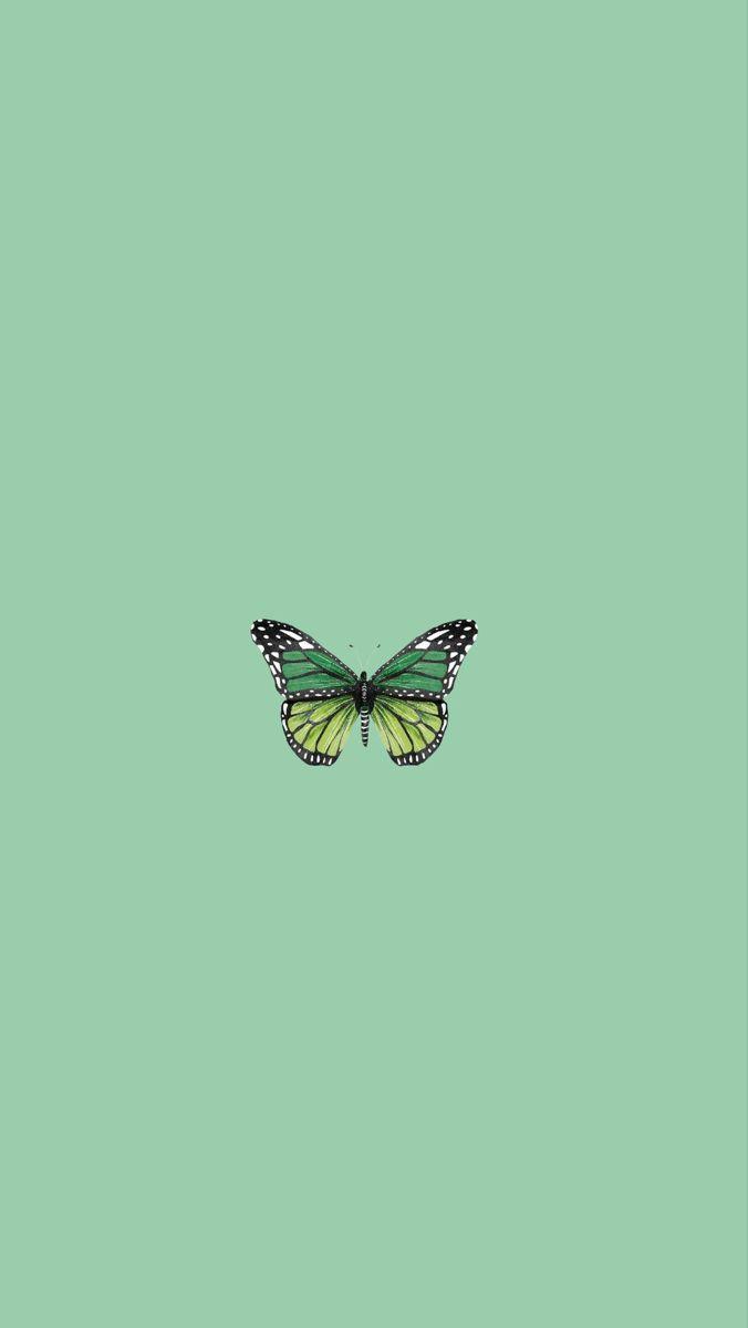 Green Butterfly Wallpaper Simple Vsco In 2020 Mint Green Wallpaper Iphone Butterfly Wallpaper Iphone Mint Green Wallpaper