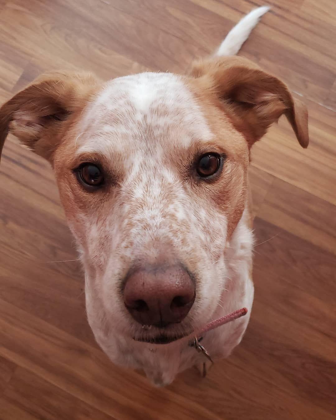 Meet Lucy Shesabeauty Loveyourfurbabies Dogsofinstagram Dog