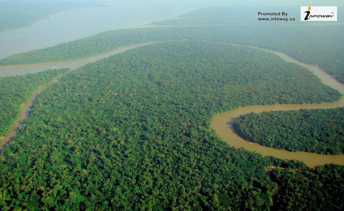 Amazon Rain Forest Amazon Rainforest Tropical Rainforest