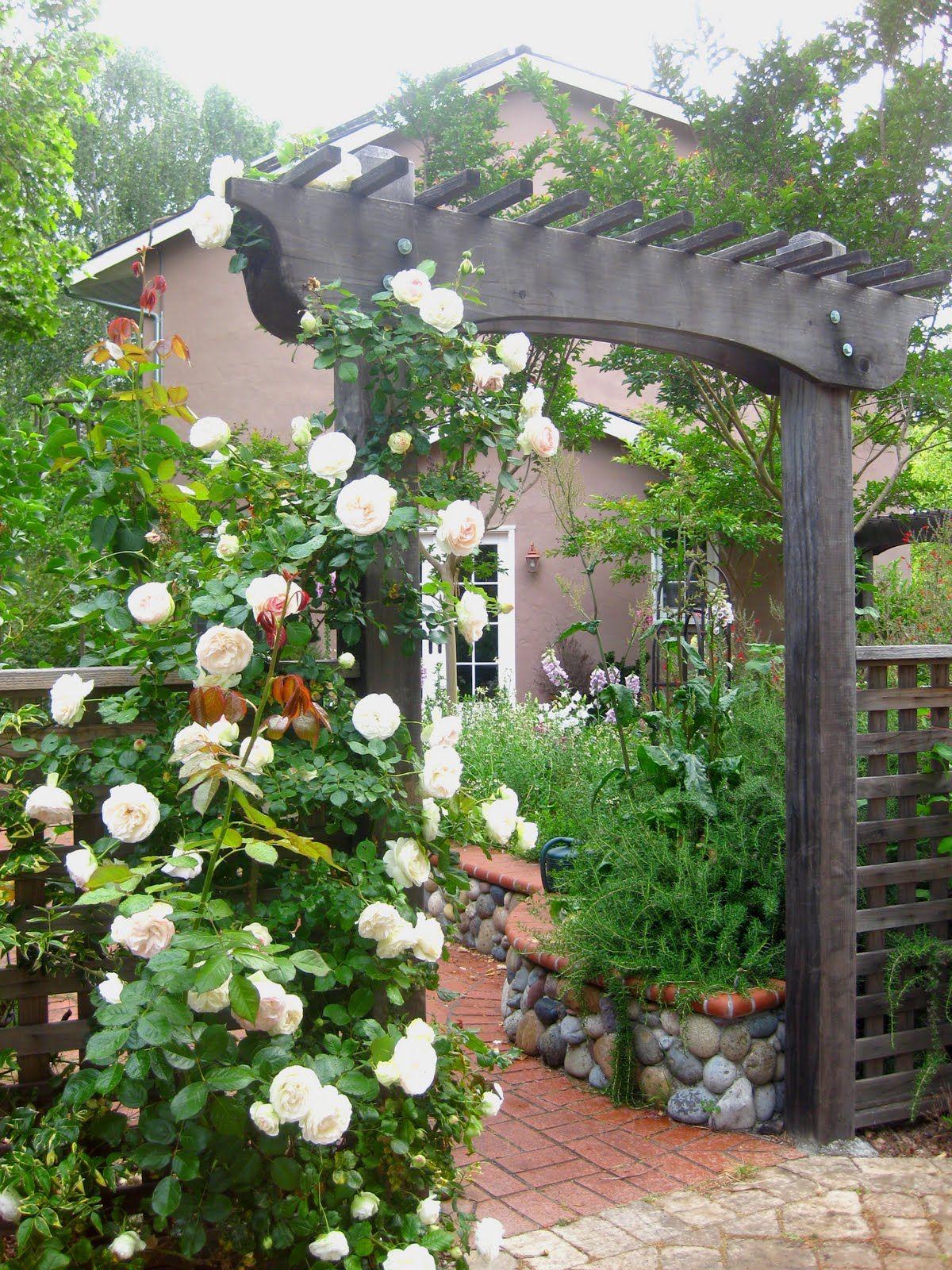 White Eden Roses ดอกกุหลาบ