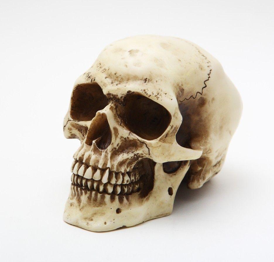 Human Skeleton Head Skeleton Head Pictures Share Tweet Share