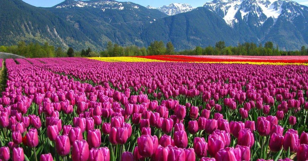 Gambar Taman Bunga Paling Indah Di Dunia