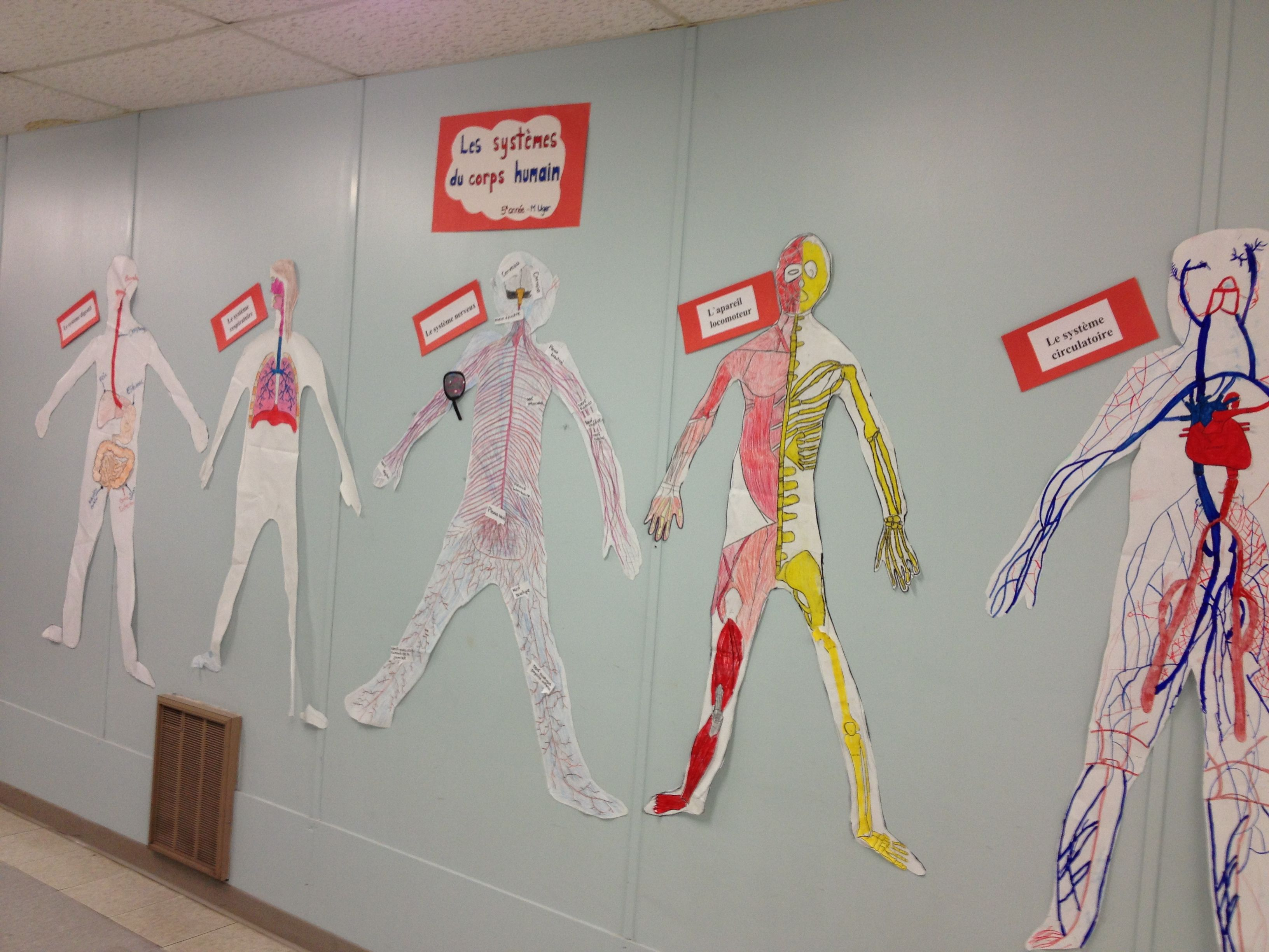 Human anatomy projects