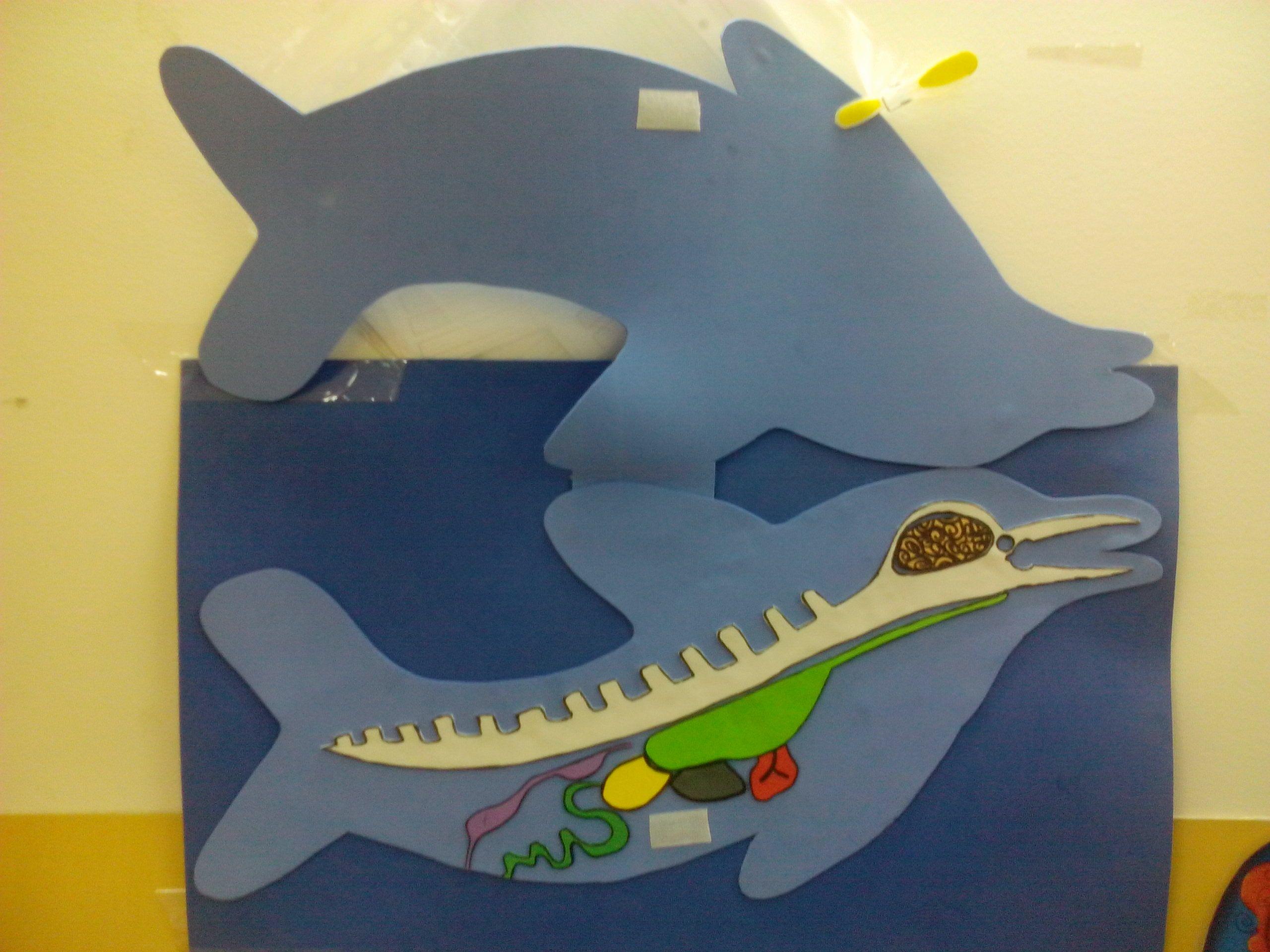 El delfín por dentro   Delfines   Pinterest   Delfines, El mar y El ...