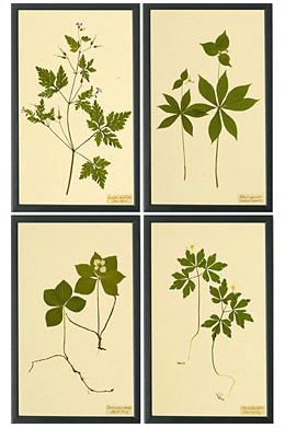 Dwell With Dignity 187 Gt Diy Botanical Prints For The Home