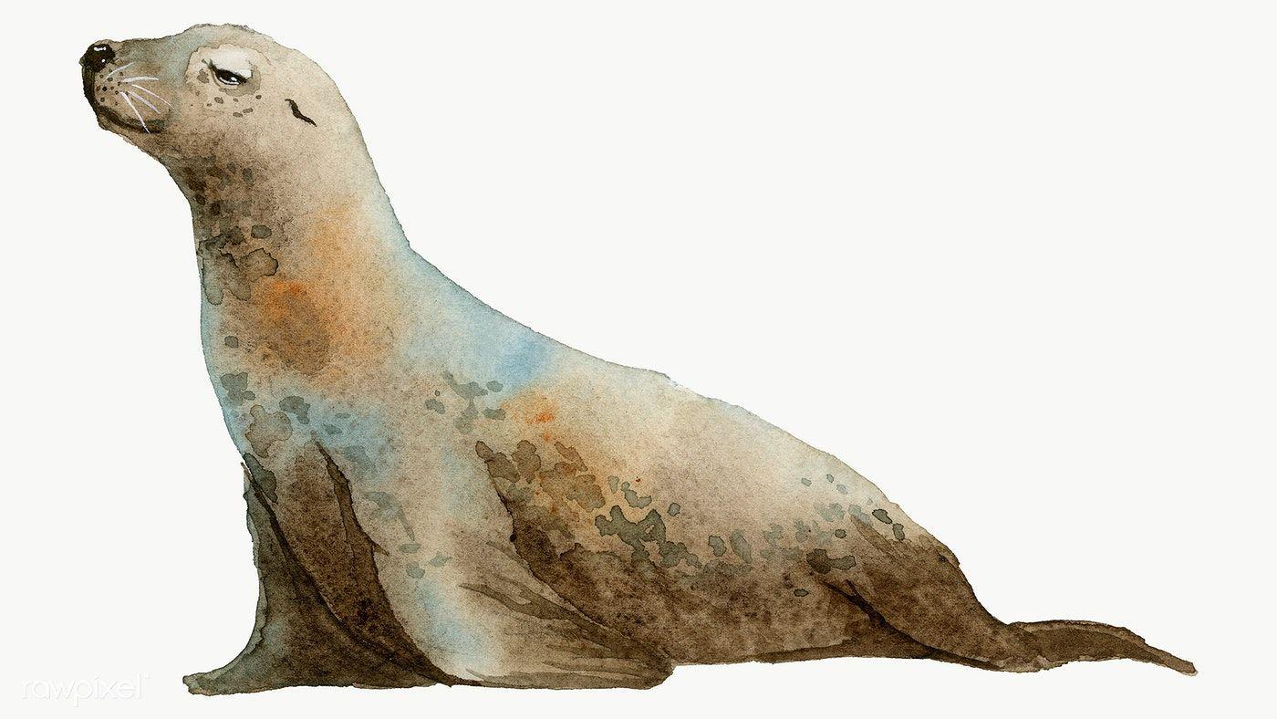 Watercolor Painted Seal Transparent Png Premium Image By Rawpixel Com Niwat Lion Painting Lion Illustration Watercolor Whale