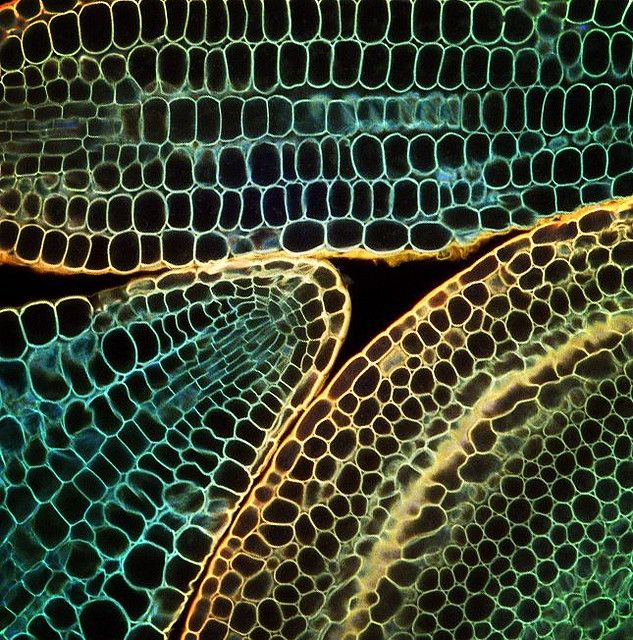 Untitled Microscopic Photography Plant Cell Patterns In Nature