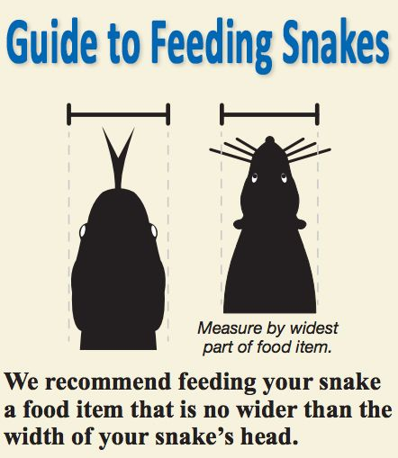 Know what size food you should be feeding your snake Care Sheets