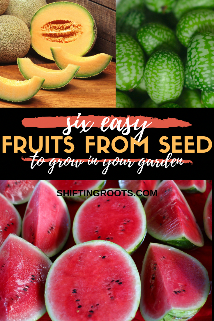 Just because you live in a cold climate doesn't mean your options for growing fruit are limited! Here's a list of six easy fruits you can grow from seed in your garden or in pots and containers in your backyard. because you live in a cold climate doesn't mean your options for growing fruit are limited!  Here's a list of six easy fruits you can grow from seed in your garden or in pots and containers in your backyard.