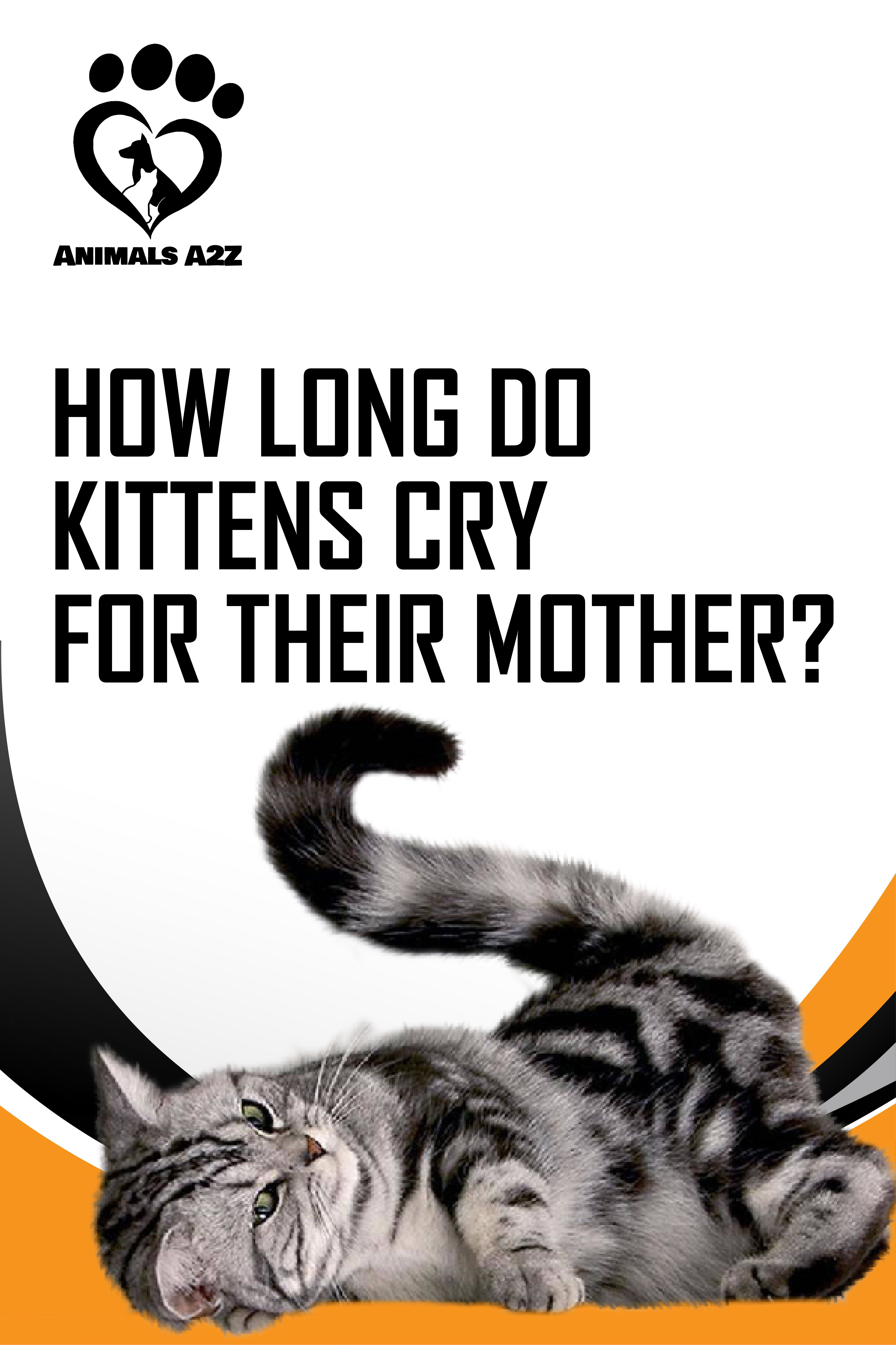 How Long Do Kittens Cry For Their Mother Cat Facts In 2020 Cat Facts Kittens Cat Crying