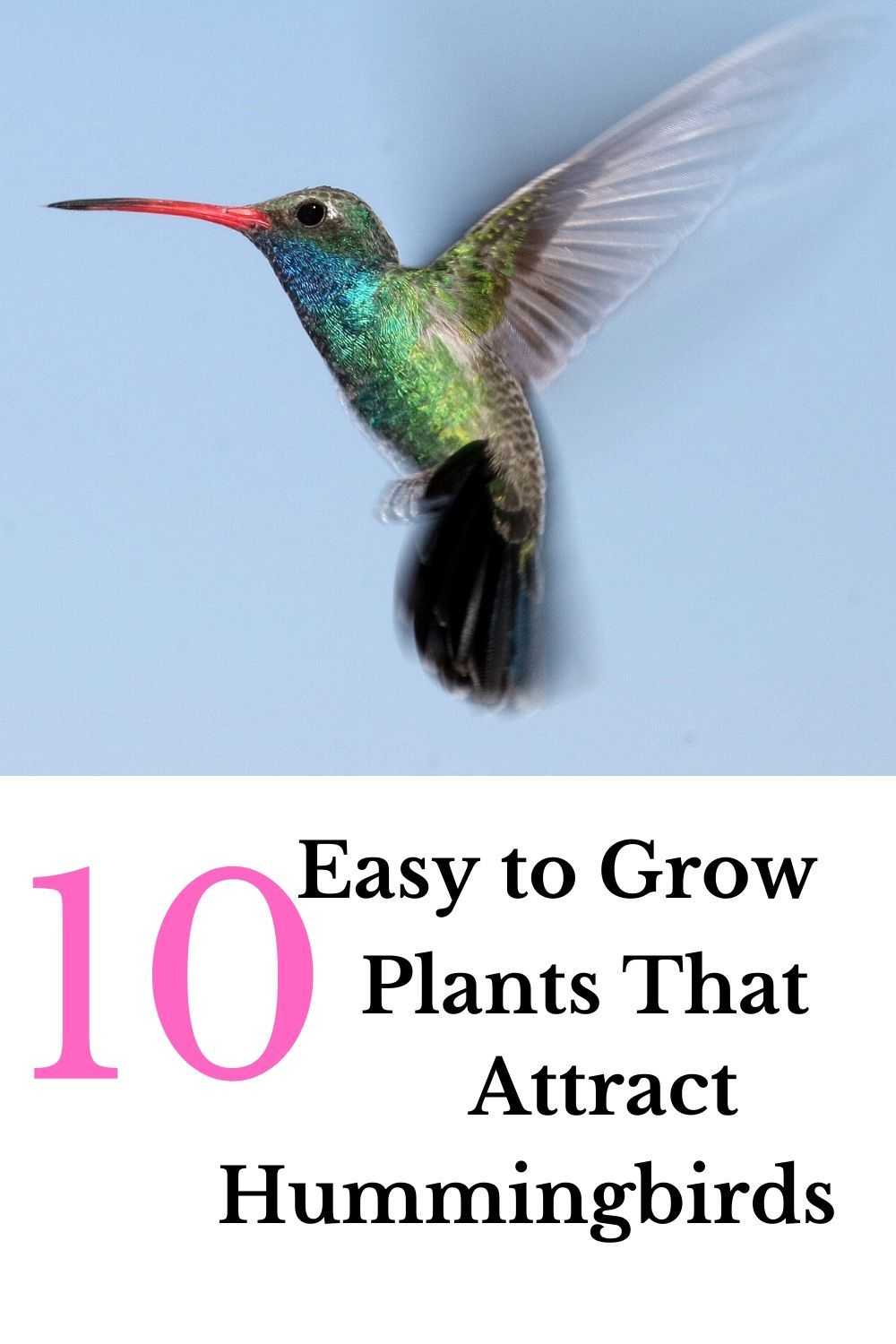 Top 10 Flowers to Attract Hummingbirds Garden Down South