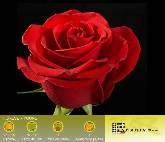 rosas colombia - Buscar con Google