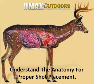 whitetail deer shot placement diagram wiring in a light switch understand anatomy for proper archery bows