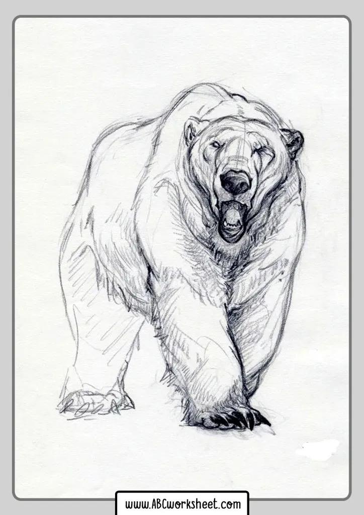 Kodiak Bear Coloring Pages Design