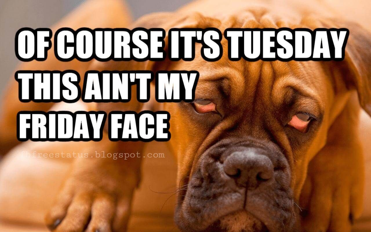 Funny Tuesday Quotes With Images, Pictures Tuesday