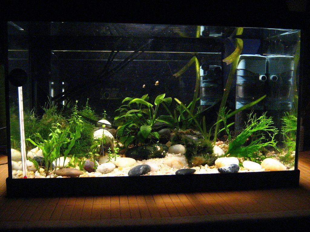 Gu a para el principiante en acuarios de agua dulce for Peces de agua dulce para peceras