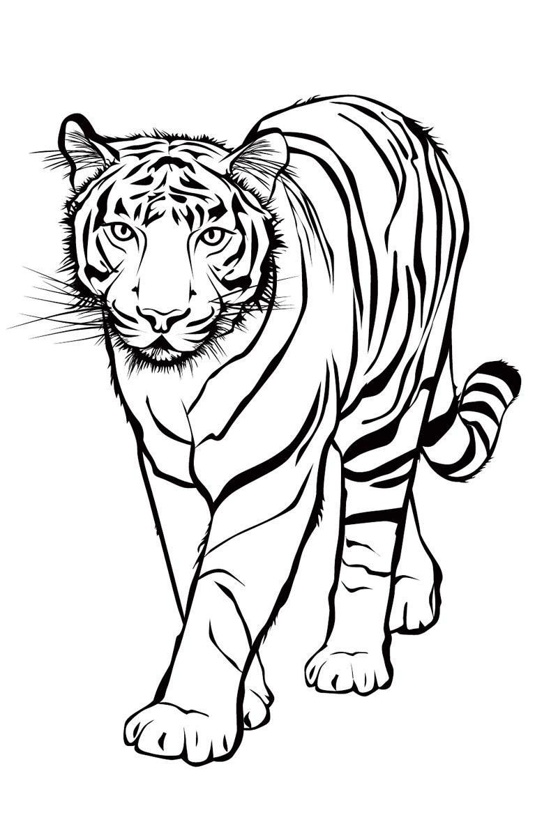 ausmalbilder tiere tigers tiger  Zoo animal coloring pages