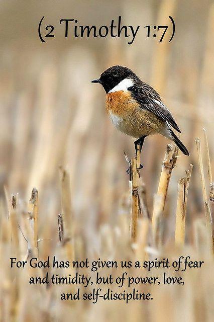 2 Timothy 1:7 nlt | Flickr - Photo Sharing!
