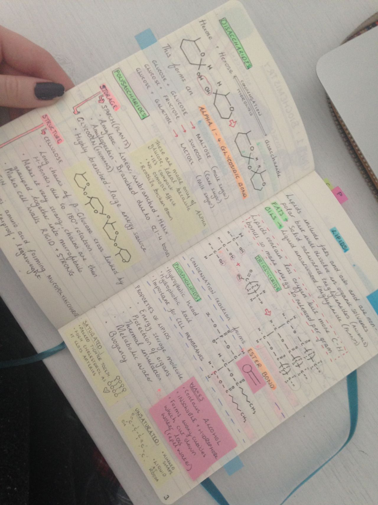 aimingfora tried to condense my biochemistry notes as much as