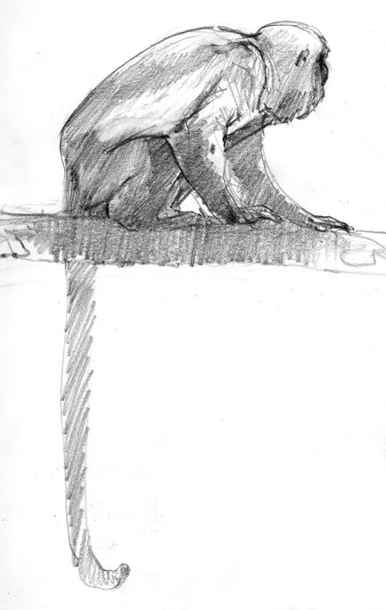 Spider Monkey Pencil Drawing Howler Monkey Drawn In Panama