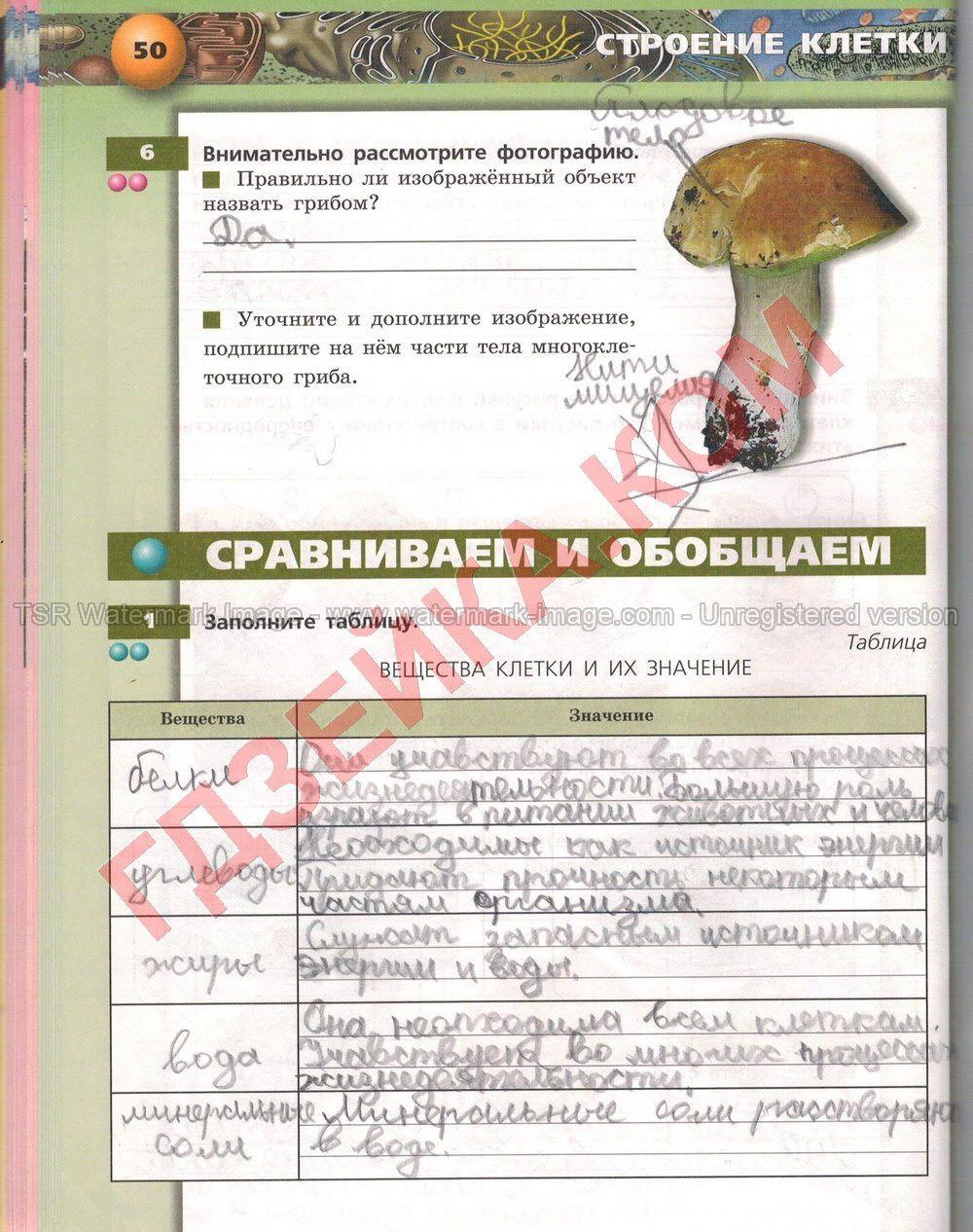 Задание по русскому языку номер 301 учебник львова ильвовой