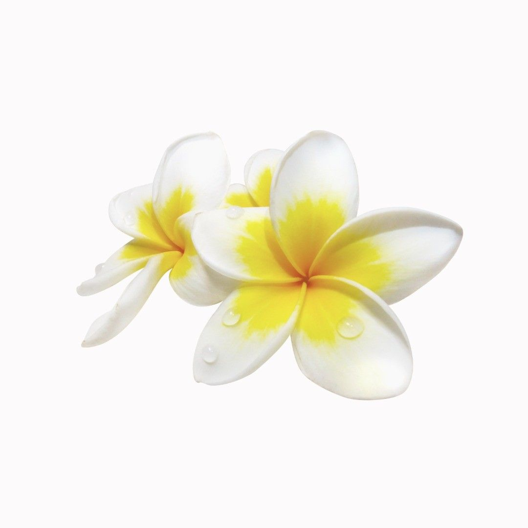 Frangipani Natural Compound Oil Plumeria Alba Flower Extract Frangipani Oil Is A Reputed Aphrodisiac Which Boosts Libido And Encourages Sensuality And Intima ในป 2020 ม ร ปภาพ