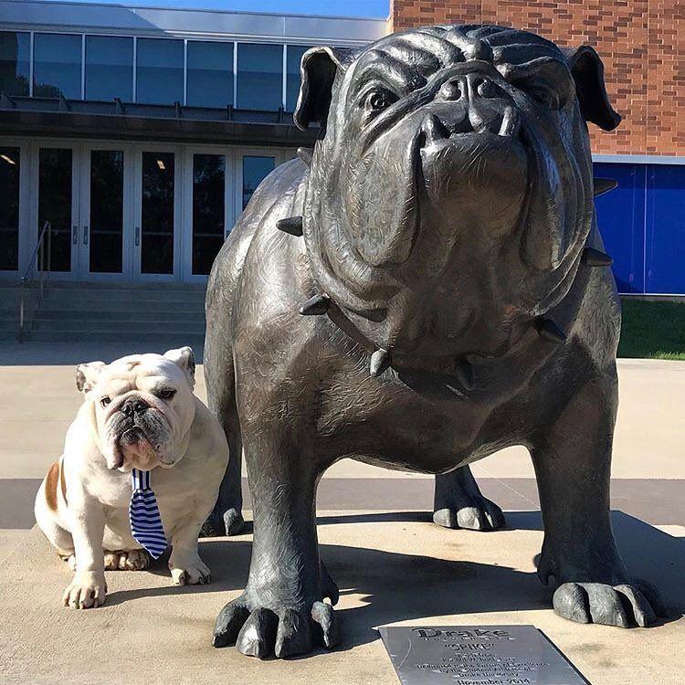 Pin by Susan Bass on English bulldogs Funny bulldog