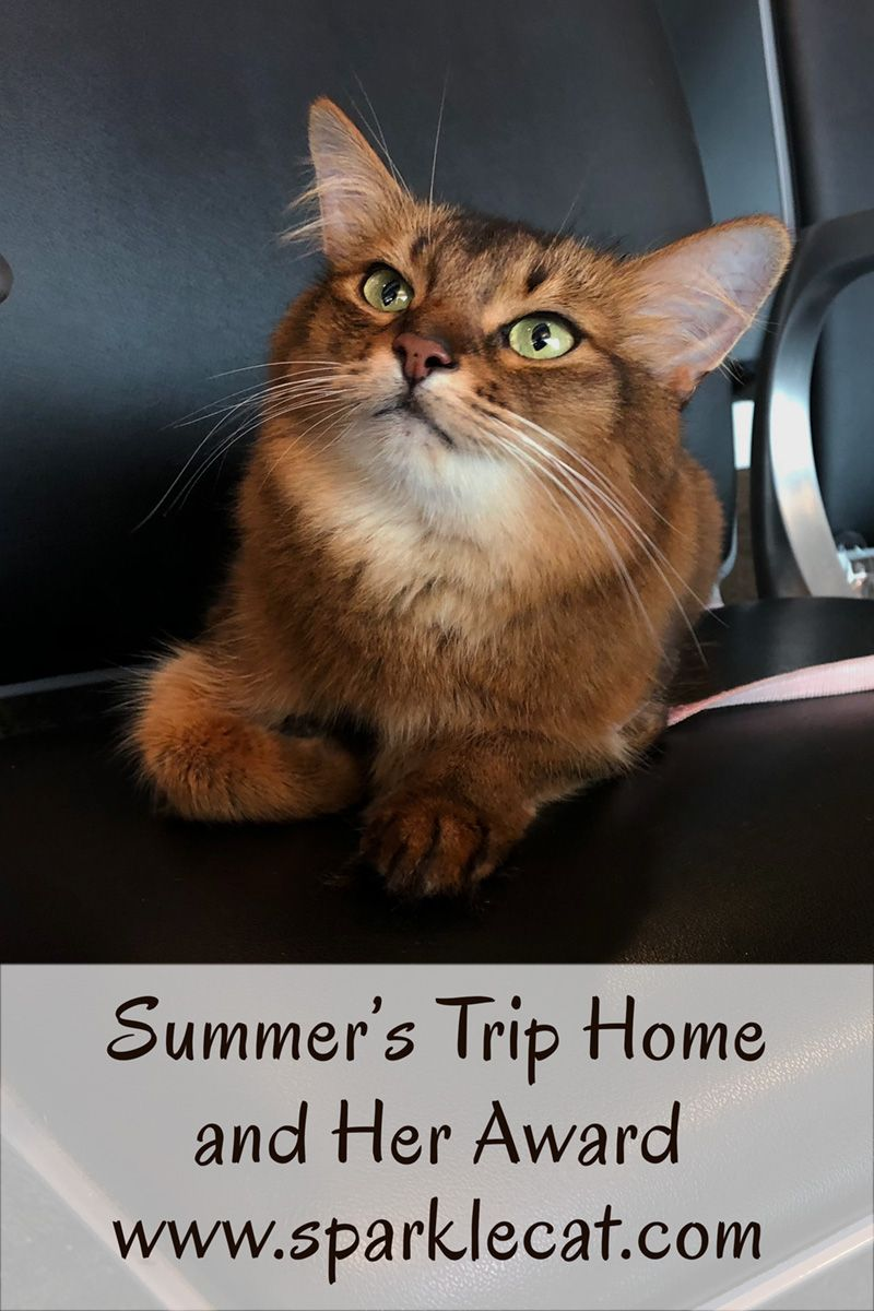 My Trip Home… and What I Won Clever animals, Cat advice