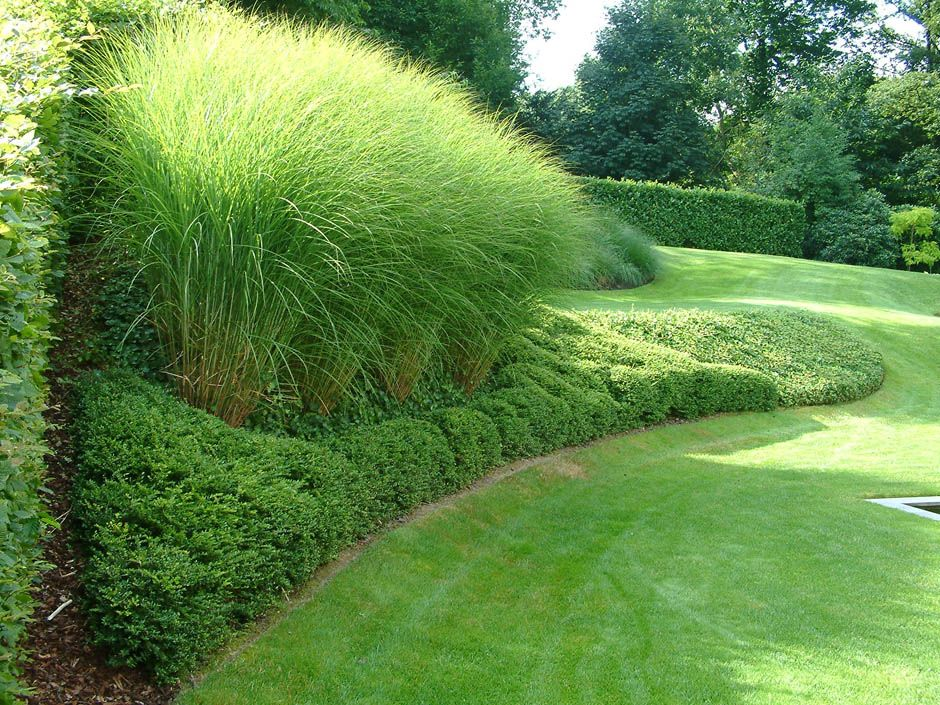 ferrard_paysagiste_plantations_31.jpg (940×705) | Ornamental ...