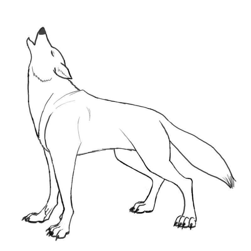 How To Draw A Wolf Howling Youtube Step By Step Instructions On