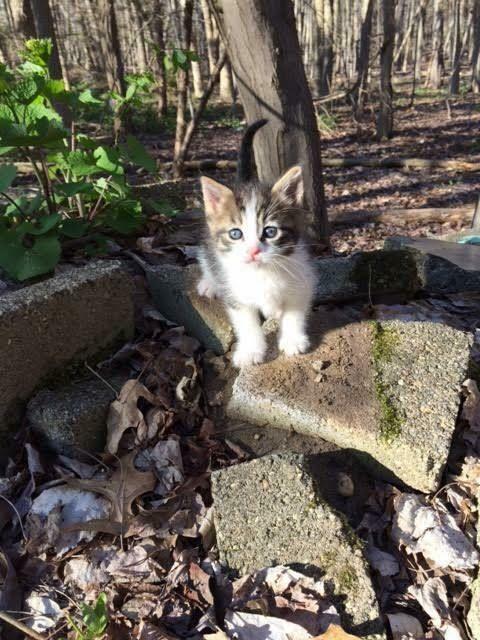 Help Rescued Kittens Family Feral Cat Rescue Food Vet Tnr Rec