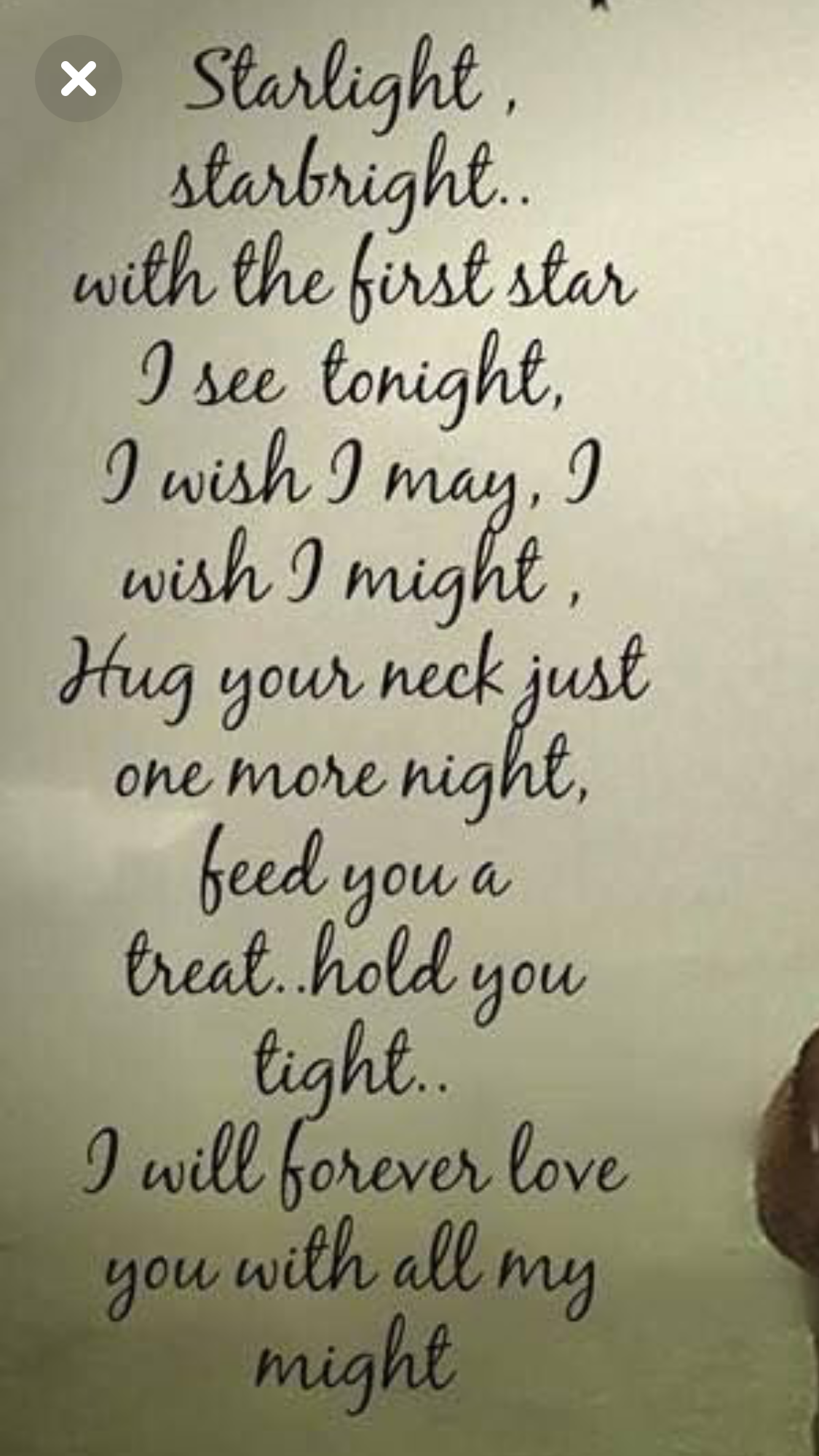 Pin By Michelle Sutton On Shadow My Love I Will Always Always Love You Mommy Loves You Always Love You One More Night