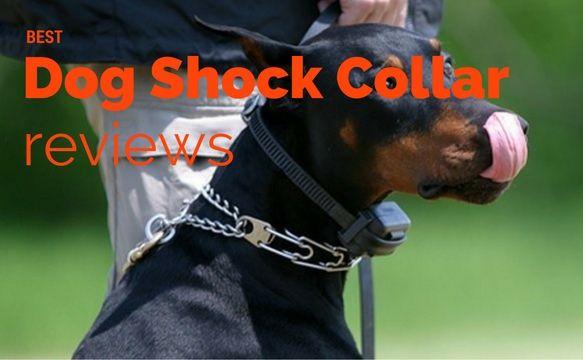 Best Dog Shock Collar Reviews Dog Shock Collar Electric Dog