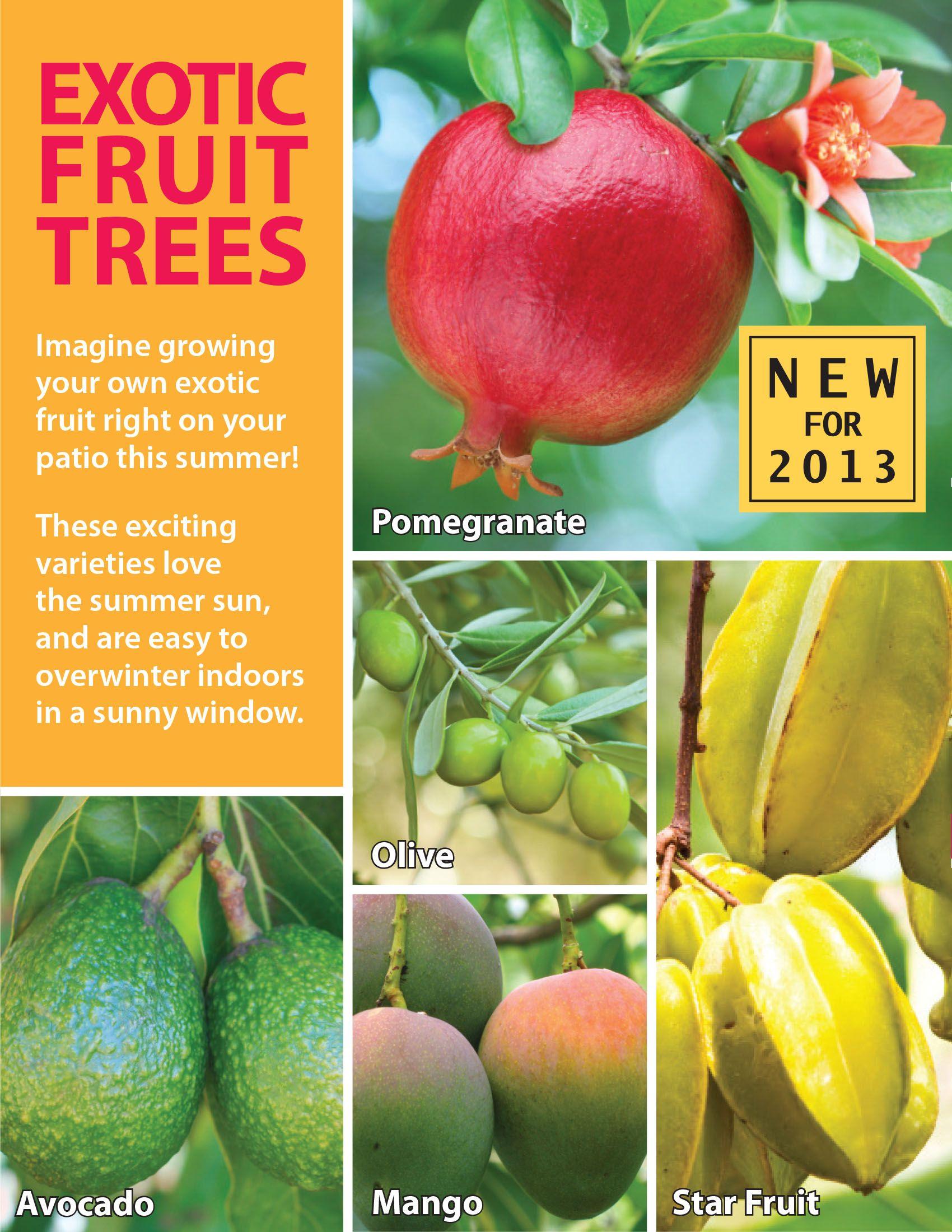 Pin By Kristen Morton On Edible Gardens Fruit Trees In Containers Indoor Fruit Trees Fruit Tree Garden