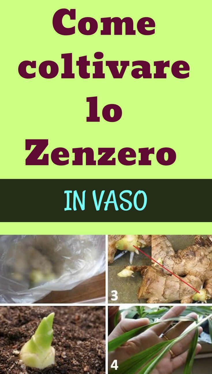 Coltivare In Casa Piante Aromatiche pin di paola dell'orto su casa | coltivare zenzero, giardino