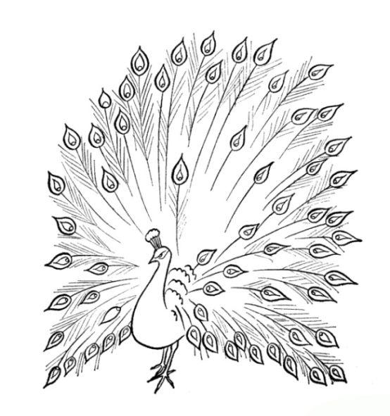 Dekorative Stilisierte Pfau Vogelfeder Art