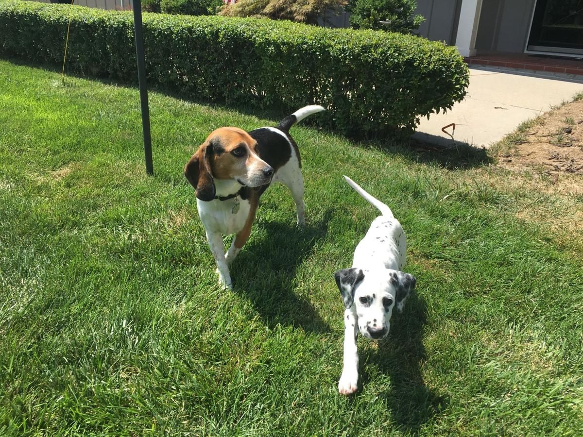 Dog Gone Problems Our Dogs Suddenly Won T Walk On The Grass Dogs Dog Behaviorist Dog Friends