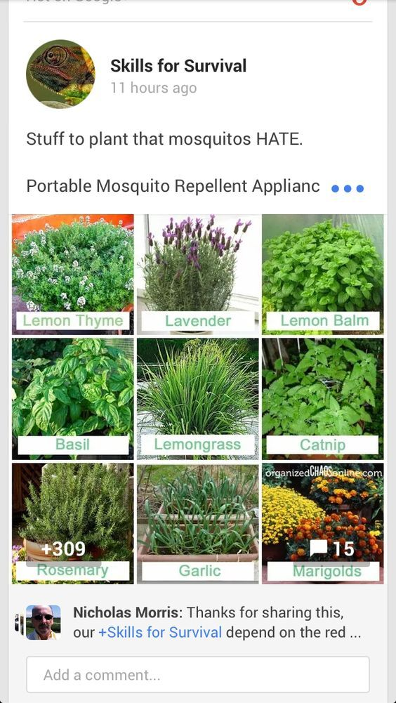 What To Plant To Keep Mosquitos Away Plants Outdoor